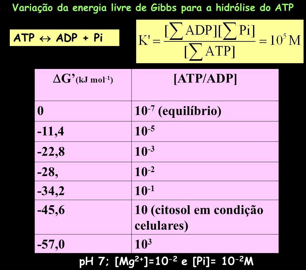 ATP ADP + Pi pH 7; [Mg 2+ ]=10 -2 e [Pi]= 10 -2 M Variação da energia livre de Gibbs para a hidrólise do ATP G (kJ mol -1 ) [ATP/ADP] 010 -7 (equilíbr