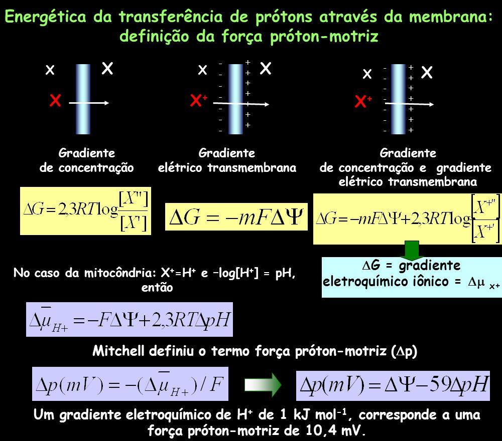 X X X Gradiente de concentração X X X+X+ -------------- ++++++++++++++ Gradiente elétrico transmembrana X X X+X+ -------------- ++++++++++++++ Gradien