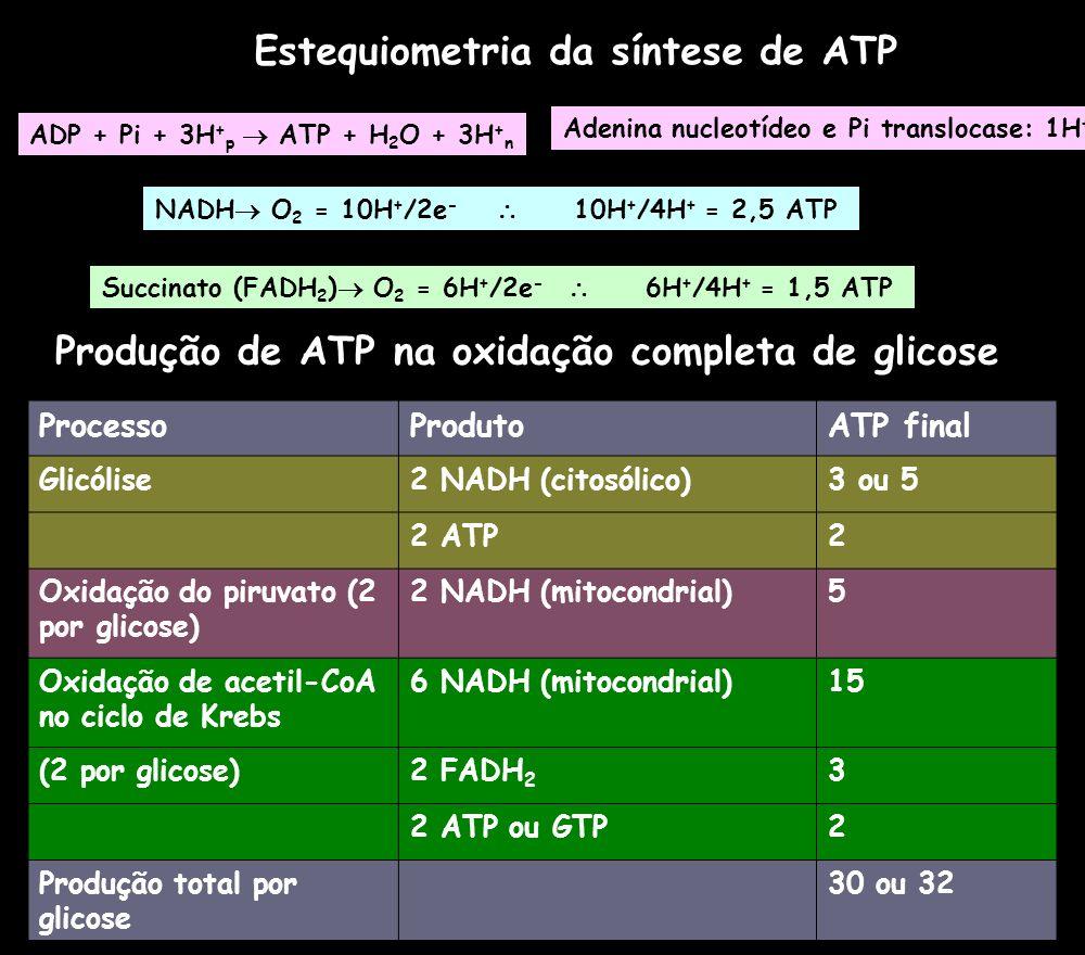 Estequiometria da síntese de ATP NADH O 2 = 10H + /2e - 10H + /4H + = 2,5 ATP Succinato (FADH 2 ) O 2 = 6H + /2e - 6H + /4H + = 1,5 ATP ADP + Pi + 3H