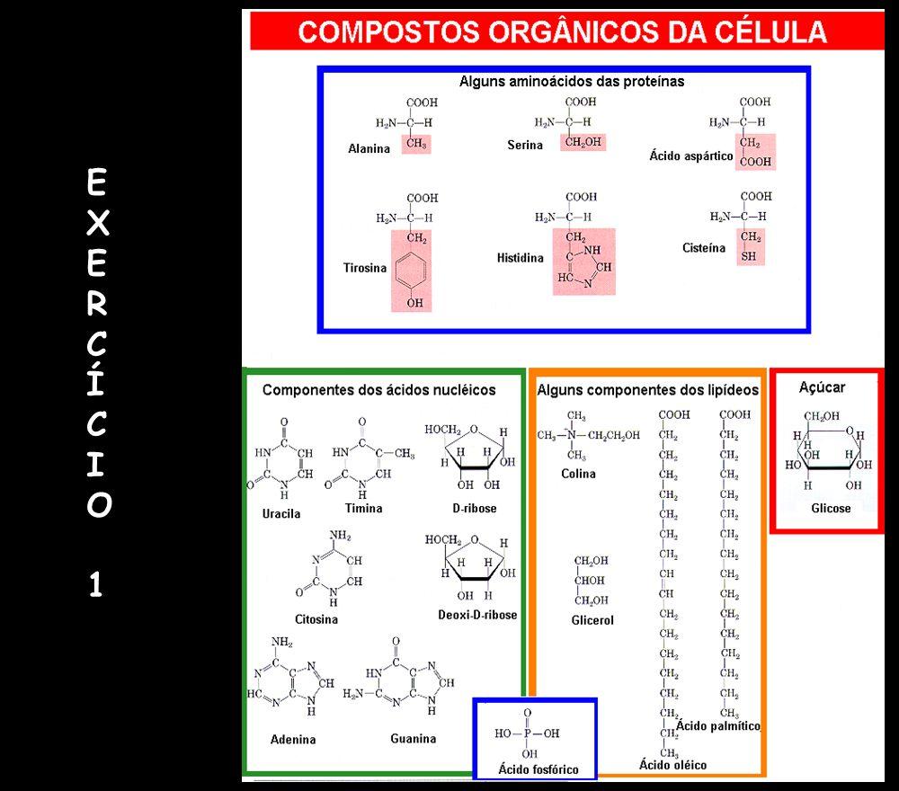 ComplexoI E º = 0,360V G º = -69,5 kJ mol -1 ComplexoI E º = 0,360V G º = -69,5 kJ mol -1 ComplexoIII E º = 0,190V G º = -36,7 kJ mol -1 ComplexoIII E º = 0,190V G º = -36,7 kJ mol -1 ComplexoIV E º = 0,580V G º = -112 kJ mol -1 ComplexoIV E º = 0,580V G º = -112 kJ mol -1 NADH NAD + (-0,315V) 2H + + ½ O 2 H 2 O (+0,815V) CoQ (+0,045V) Citocromo c (+0,235V) ComplexoII Succinato FADH 2 Fumarato (+0,030V) -0,4 -0,2 0 0,2 0,4 0,8 0,6 E (V)