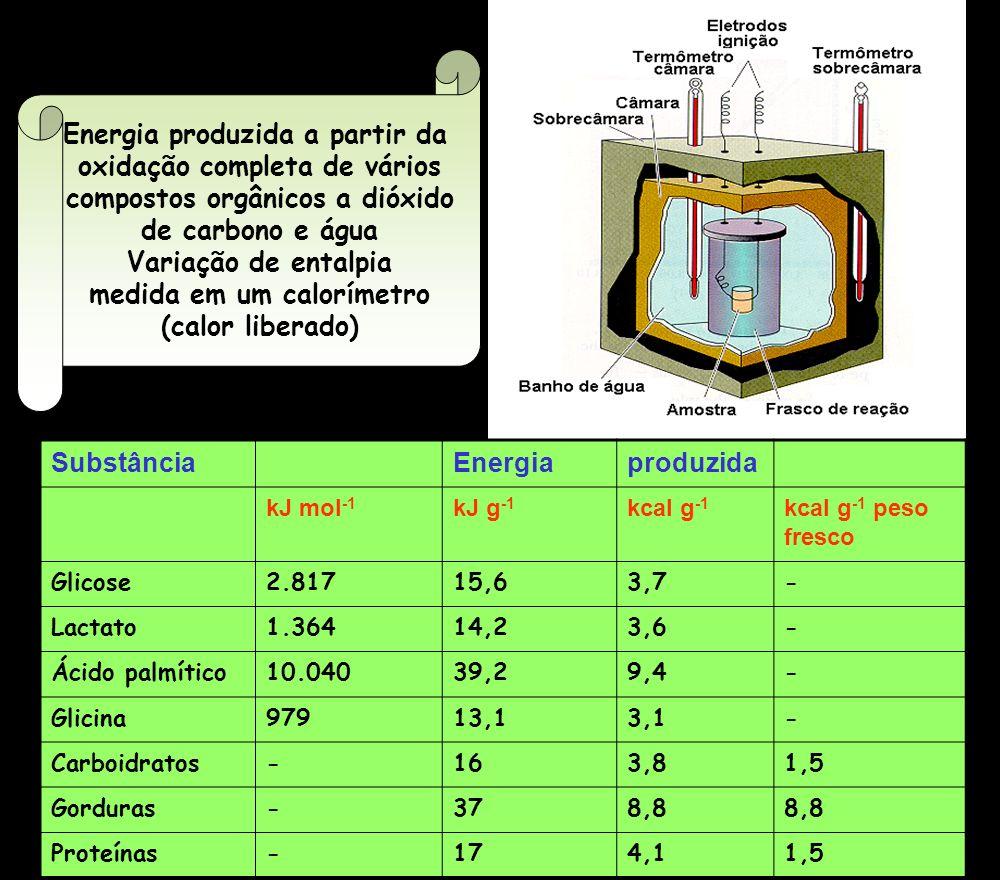 SubstânciaEnergiaproduzida kJ mol -1 kJ g -1 kcal g -1 kcal g -1 peso fresco Glicose2.81715,63,7- Lactato1.36414,23,6- Ácido palmítico10.04039,29,4- G