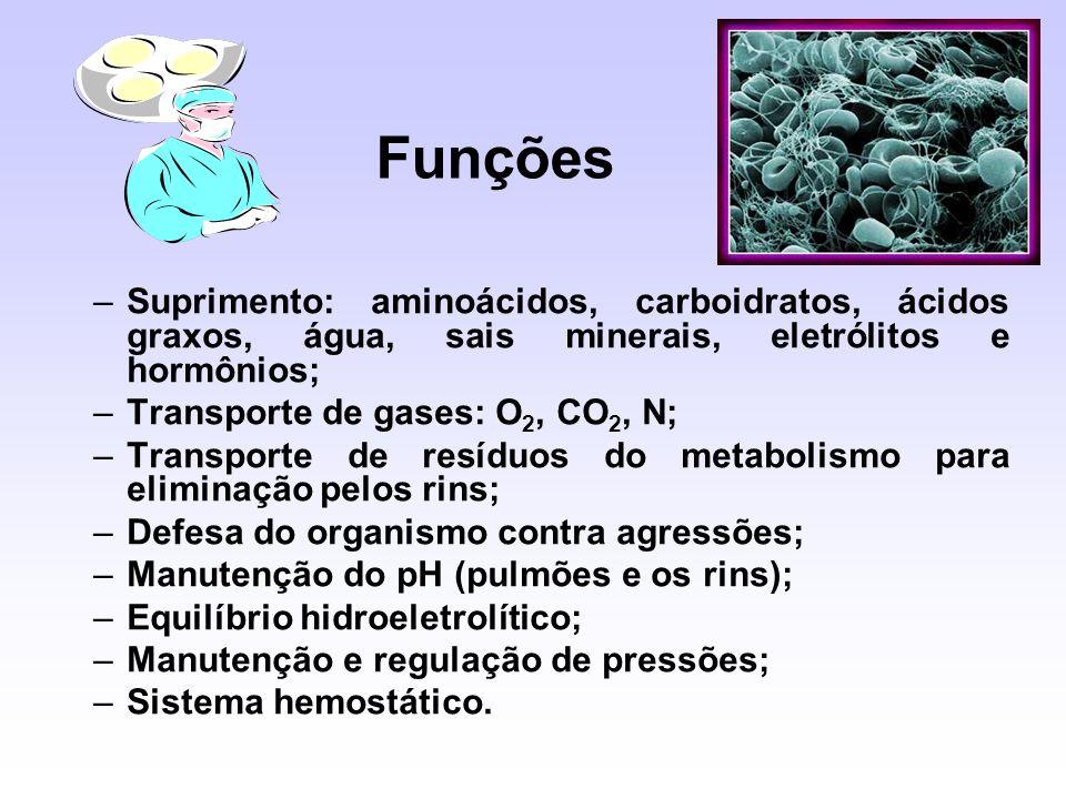 –Suprimento: aminoácidos, carboidratos, ácidos graxos, água, sais minerais, eletrólitos e hormônios; –Transporte de gases: O 2, CO 2, N; –Transporte d