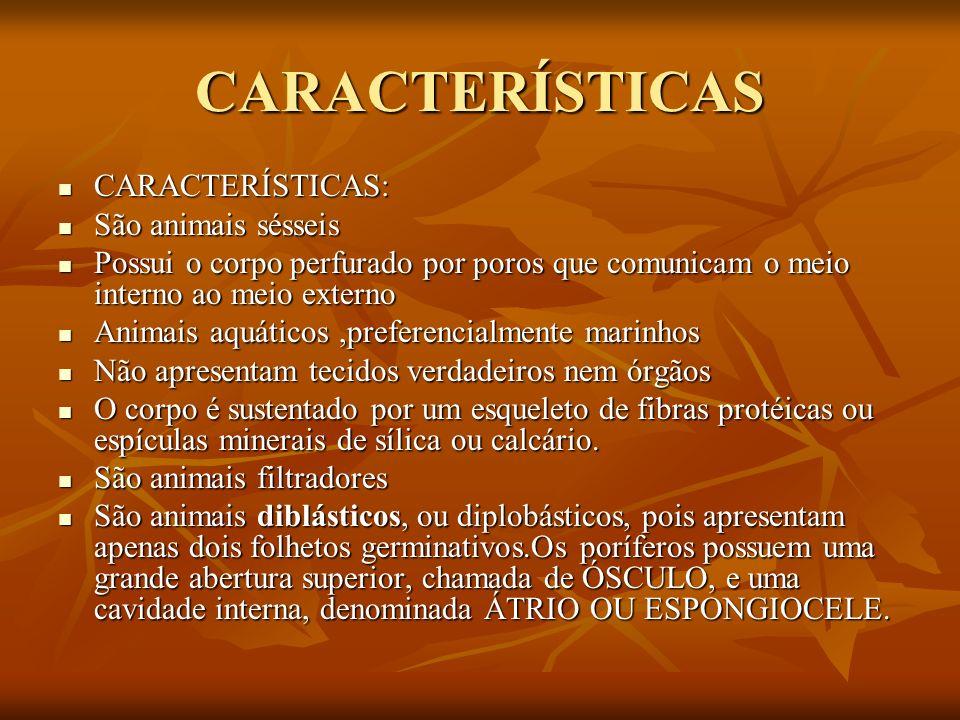 CARACTERÍSTICAS CARACTERÍSTICAS: CARACTERÍSTICAS: São animais sésseis São animais sésseis Possui o corpo perfurado por poros que comunicam o meio inte