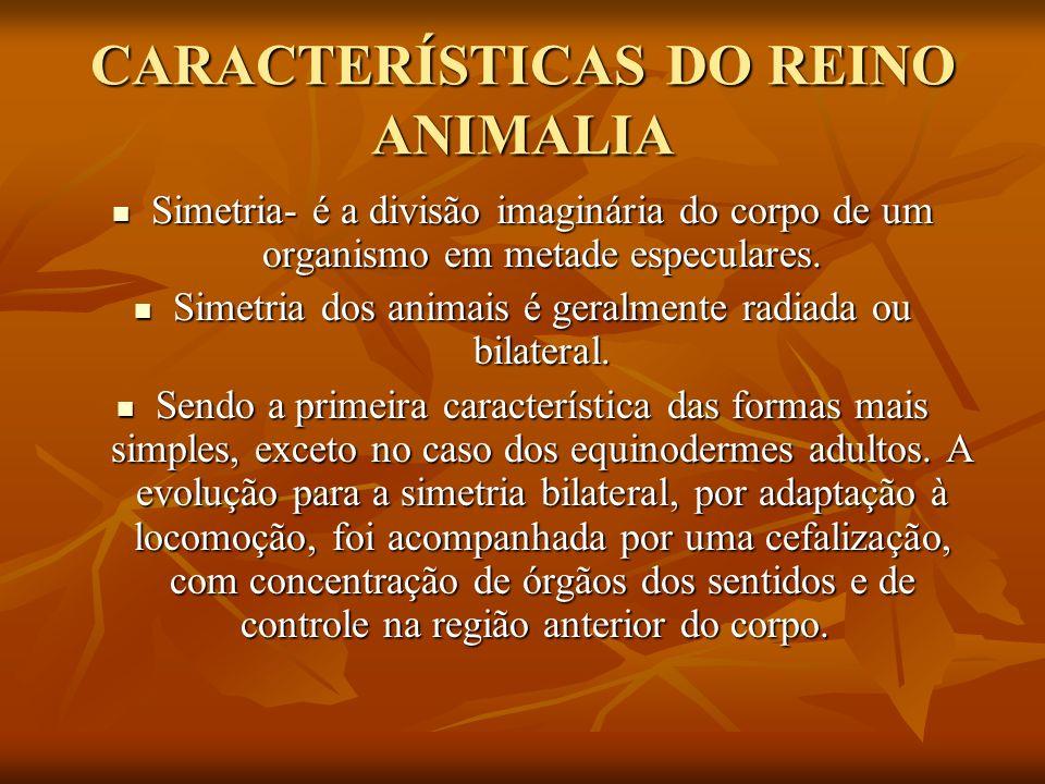CARACTERÍSTICAS DO REINO ANIMALIA Simetria- é a divisão imaginária do corpo de um organismo em metade especulares. Simetria- é a divisão imaginária do