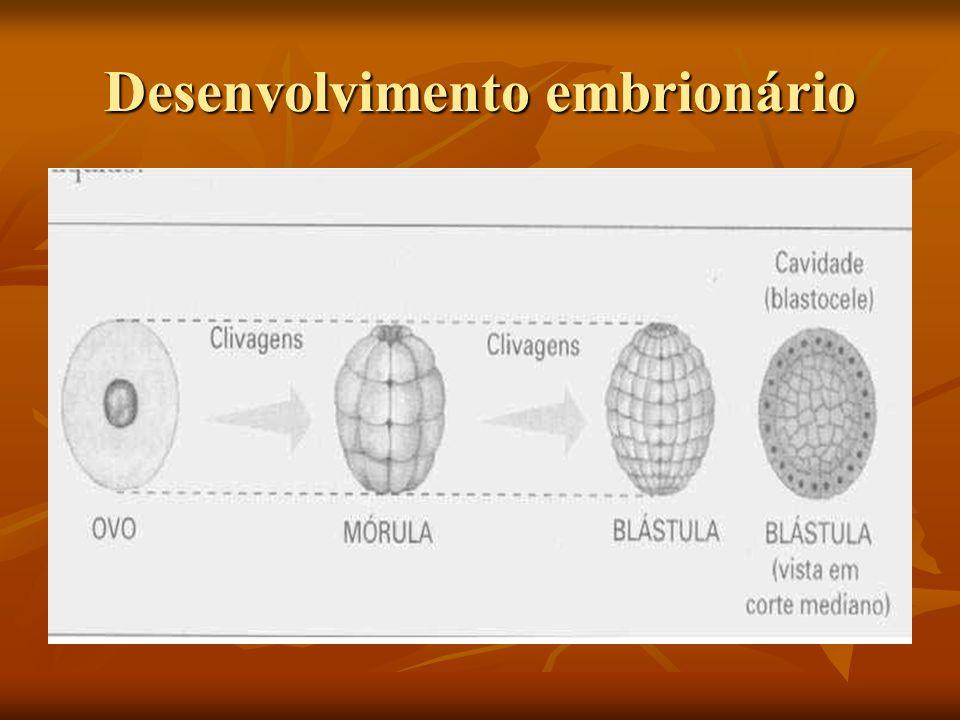 CARACTERÍSTICAS CARACTERÍSTICAS: CARACTERÍSTICAS: São animais sésseis São animais sésseis Possui o corpo perfurado por poros que comunicam o meio interno ao meio externo Possui o corpo perfurado por poros que comunicam o meio interno ao meio externo Animais aquáticos,preferencialmente marinhos Animais aquáticos,preferencialmente marinhos Não apresentam tecidos verdadeiros nem órgãos Não apresentam tecidos verdadeiros nem órgãos O corpo é sustentado por um esqueleto de fibras protéicas ou espículas minerais de sílica ou calcário.
