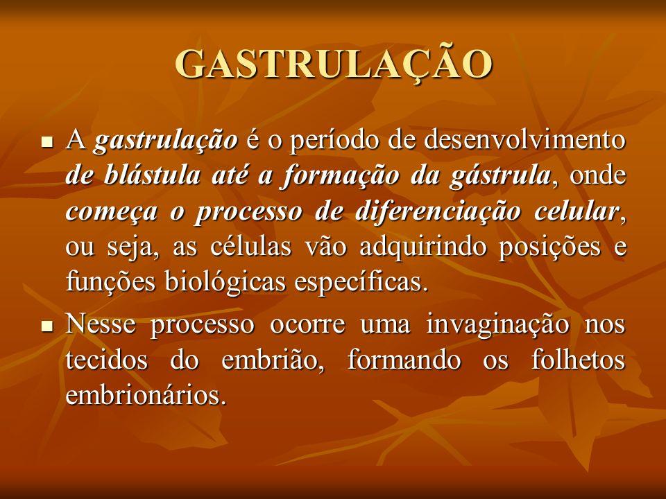 GASTRULAÇÃO A gastrulação é o período de desenvolvimento de blástula até a formação da gástrula, onde começa o processo de diferenciação celular, ou s