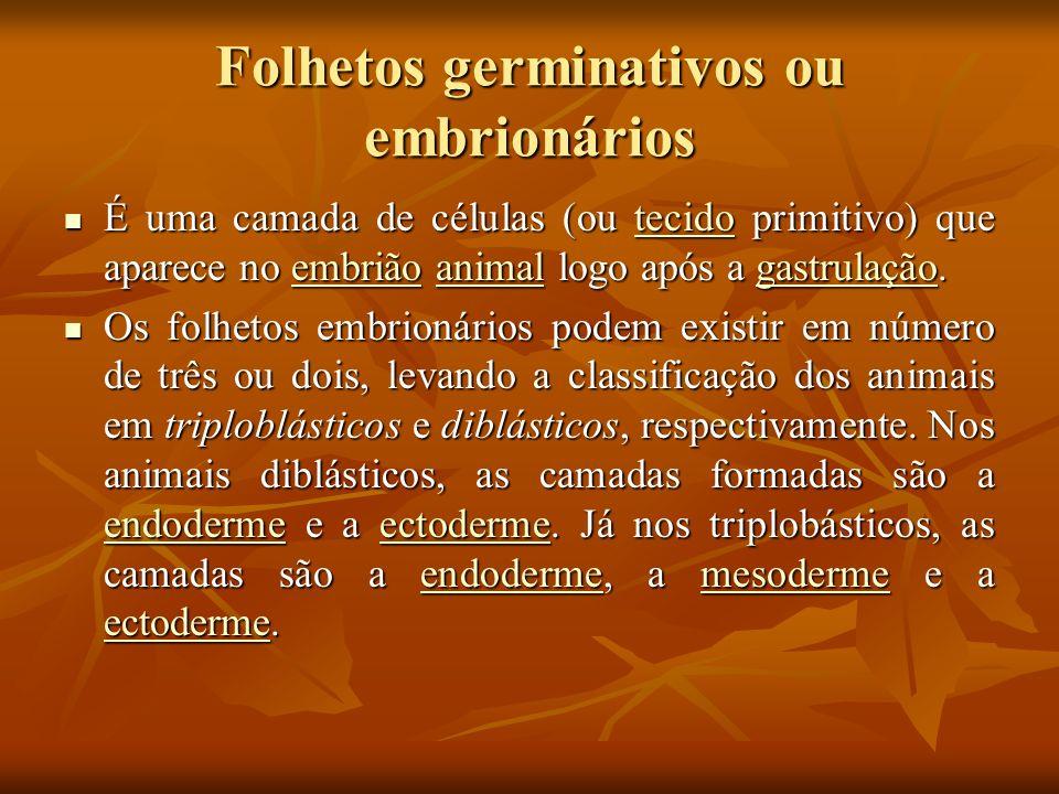 Folhetos germinativos Folhetos Embrionários: ECTODERME: sistema nervoso, pele, glândulas, unhas, penas, escamas, lente dos olhos, reveste órgãos cavitários, esmalte dos dentes.