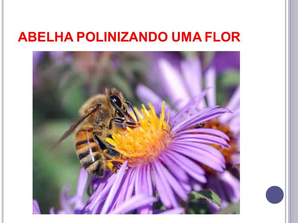 ABELHA POLINIZANDO UMA FLOR