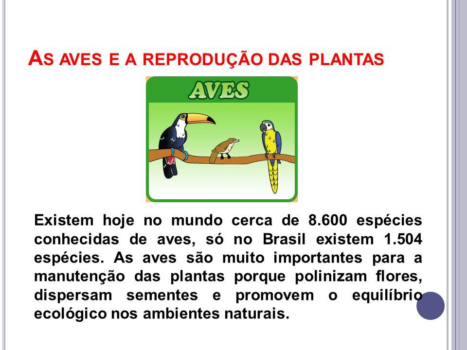 A S AVES E A REPRODUÇÃO DAS PLANTAS Existem hoje no mundo cerca de 8.600 espécies conhecidas de aves, só no Brasil existem 1.504 espécies. As aves são