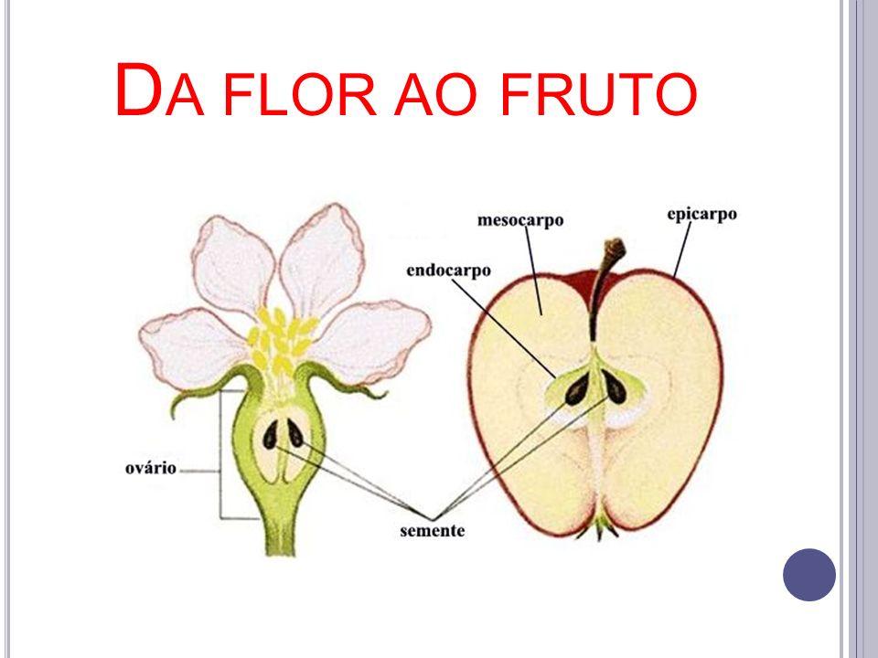 D A FLOR AO FRUTO