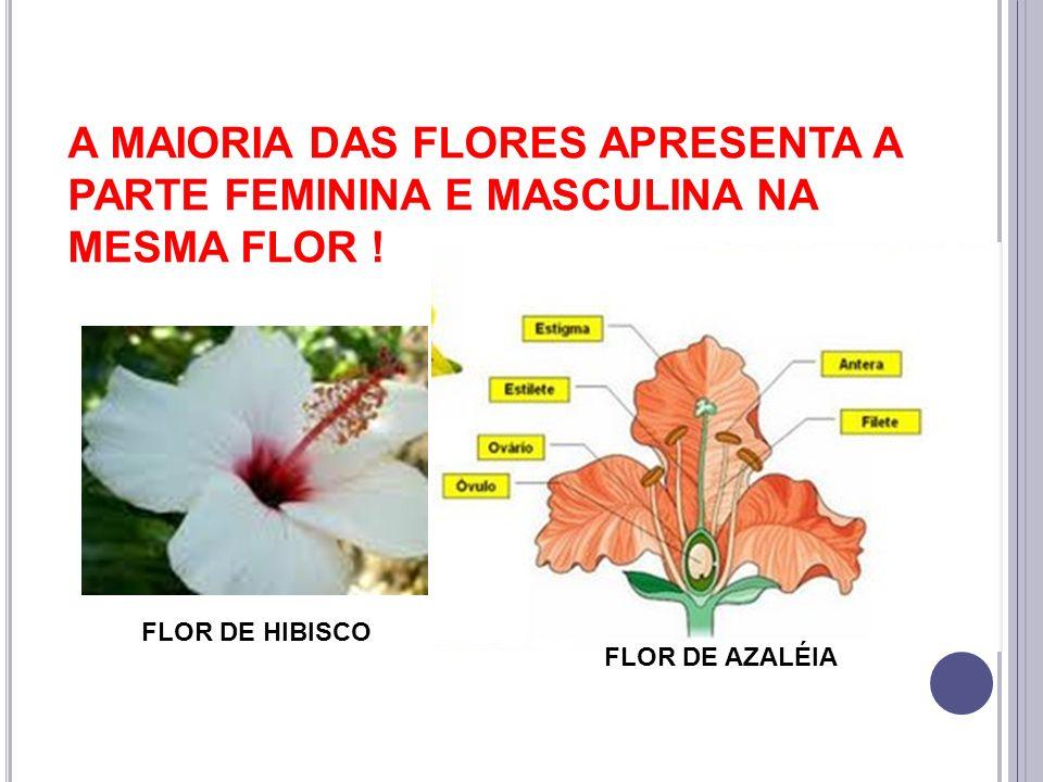 A MAIORIA DAS FLORES APRESENTA A PARTE FEMININA E MASCULINA NA MESMA FLOR ! FLOR DE HIBISCO FLOR DE AZALÉIA
