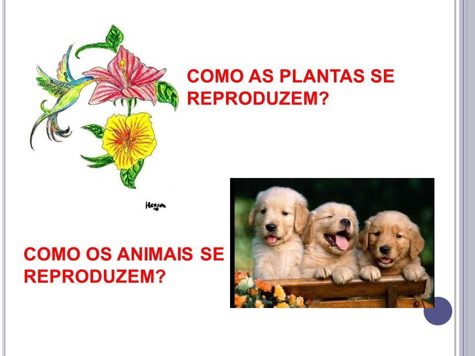 COMO AS PLANTAS SE REPRODUZEM? COMO OS ANIMAIS SE REPRODUZEM?