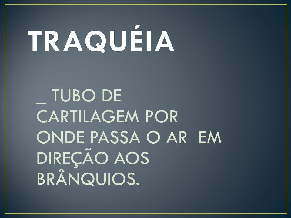 _ TUBO DE CARTILAGEM POR ONDE PASSA O AR EM DIREÇÃO AOS BRÂNQUIOS.