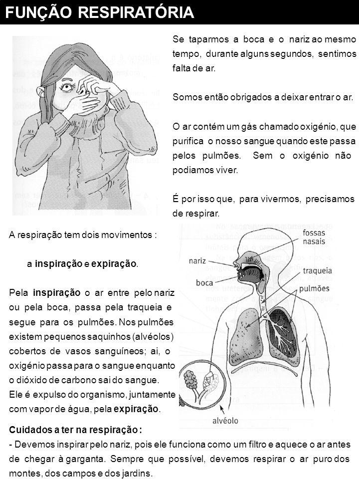 FUNÇÃO RESPIRATÓRIA Se taparmos a boca e o nariz ao mesmo tempo, durante alguns segundos, sentimos falta de ar.