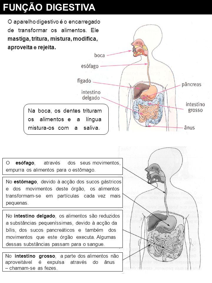 Função Digestiva FICHA FORMATIVA NOMEDATA 1 – Observo a figura e faço a legenda : 2 – Assinala com um a resposta certa : .
