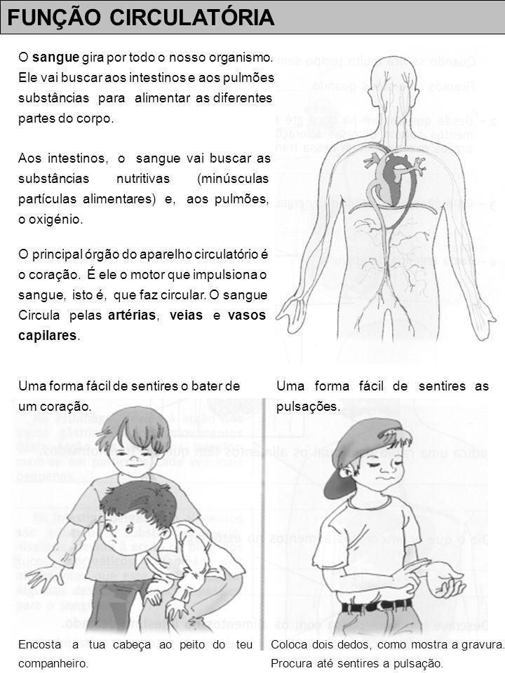 FUNÇÃO CIRCULATÓRIA FICHA DE TRABALHO NOMEDATA 1 – Como se chama a bomba que bombeia o sangue .