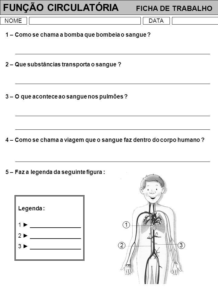 FUNÇÃO CIRCULATÓRIA FICHA DE TRABALHO NOMEDATA 1 – Quais são os principais órgãos do aparelho circulatório .