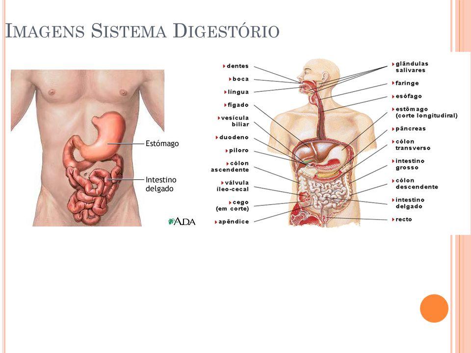 I MAGENS S ISTEMA D IGESTÓRIO