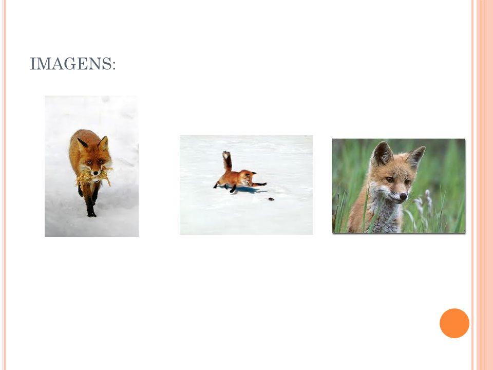 IMAGENS: