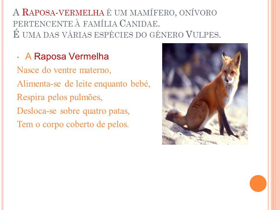 A Raposa Vermelha Nasce do ventre materno, Alimenta-se de leite enquanto bebé, Respira pelos pulmões, Desloca-se sobre quatro patas, Tem o corpo cober