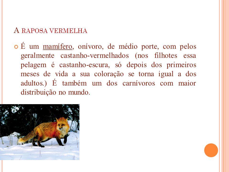 A RAPOSA VERMELHA É um mamífero, onívoro, de médio porte, com pelos geralmente castanho-vermelhados (nos filhotes essa pelagem é castanho-escura, só d