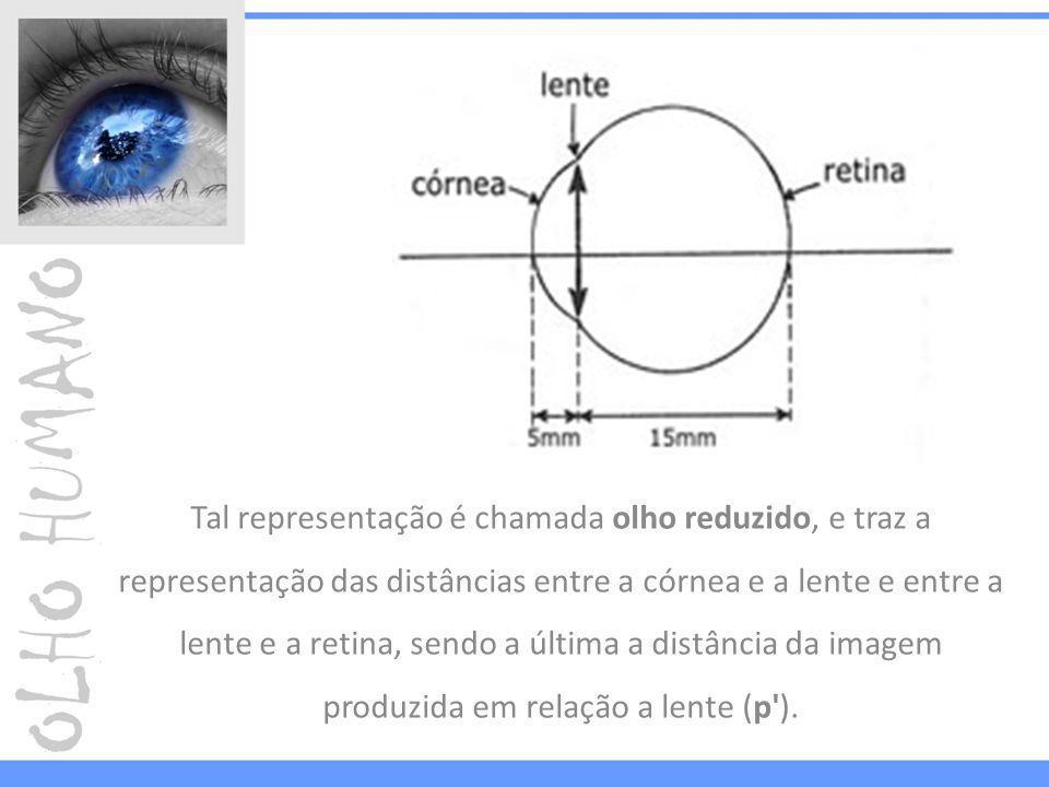 Tal representação é chamada olho reduzido, e traz a representação das distâncias entre a córnea e a lente e entre a lente e a retina, sendo a última a distância da imagem produzida em relação a lente (p ).