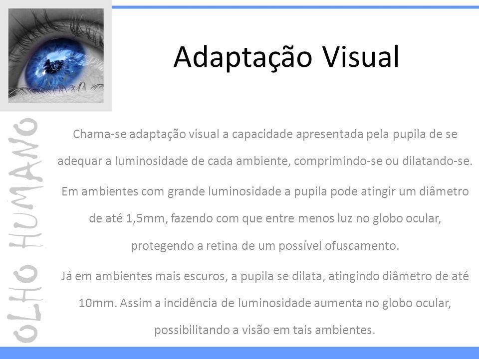 Adaptação Visual Chama-se adaptação visual a capacidade apresentada pela pupila de se adequar a luminosidade de cada ambiente, comprimindo-se ou dilatando-se.