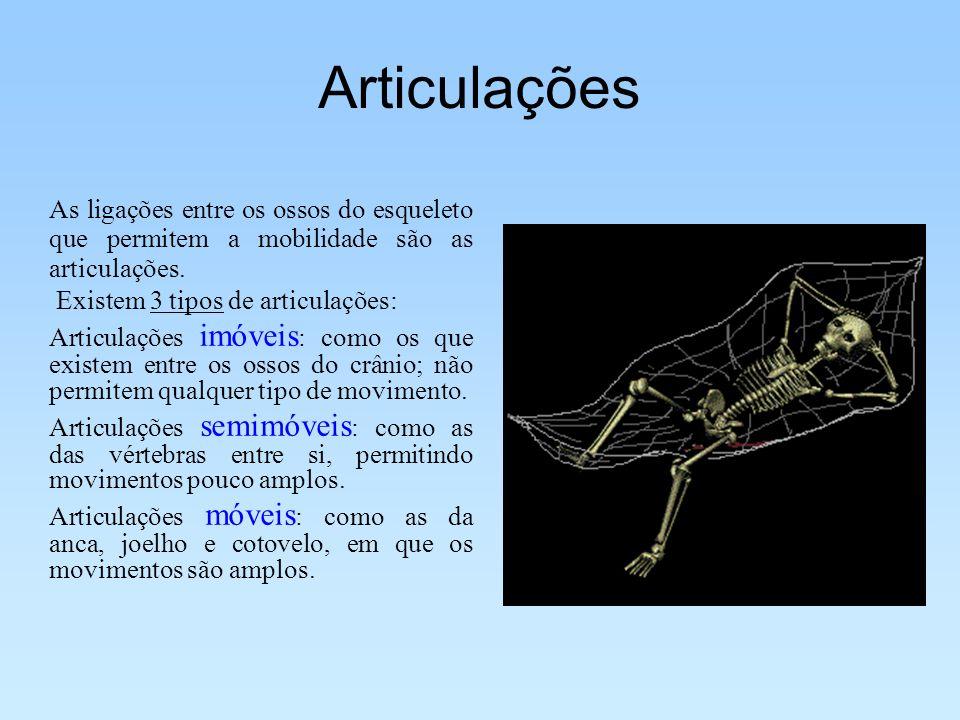 Articulações As ligações entre os ossos do esqueleto que permitem a mobilidade são as articulações. Existem 3 tipos de articulações: Articulações imóv