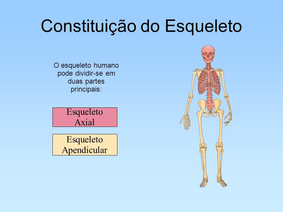 Constituição do Esqueleto O esqueleto humano pode dividir-se em duas partes principais: Esqueleto Apendicular Esqueleto Axial