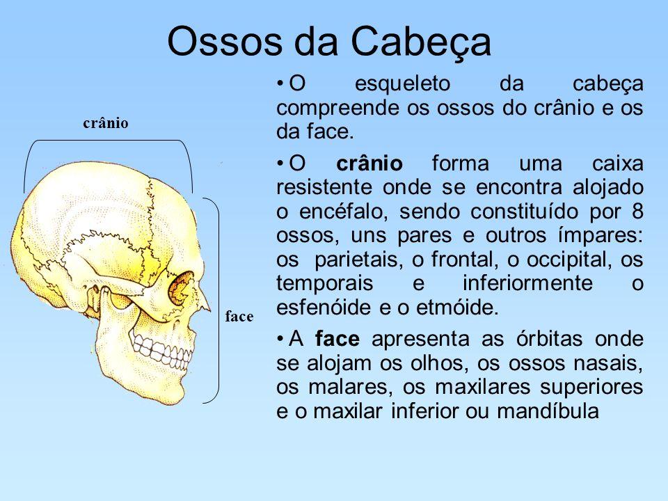 Ossos da cabeça Parietal Frontal Occipital Temporal Esfenóide Orbita Nasal MalarMaxilar superior Maxilar inferior Ossos do crânio Ossos da face