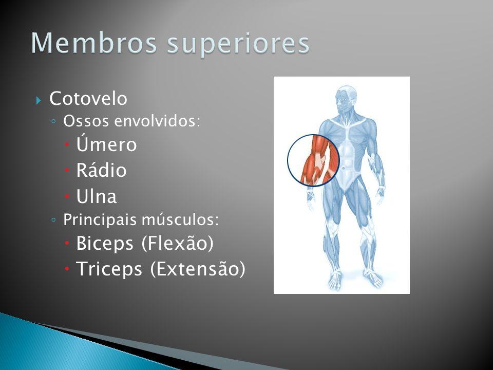 Cotovelo Ossos envolvidos: Úmero Rádio Ulna Principais músculos: Biceps (Flexão) Triceps (Extensão)