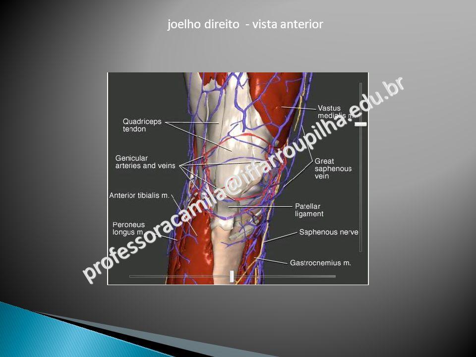 joelho direito - vista anterior professoracamila@iffarroupilha.edu.br