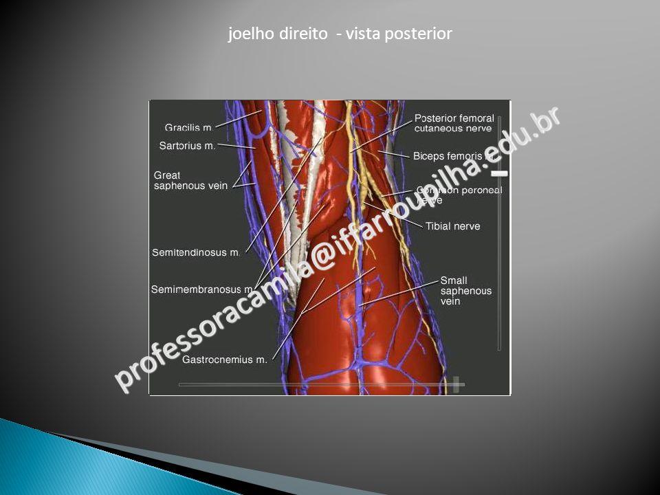 joelho direito - vista posterior professoracamila@iffarroupilha.edu.br