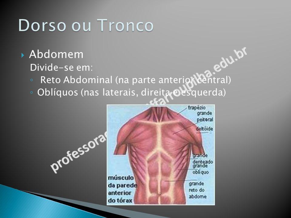 professoracamila@iffarroupilha.edu.br Abdomem Divide-se em: Reto Abdominal (na parte anterior central) Oblíquos (nas laterais, direita e esquerda)