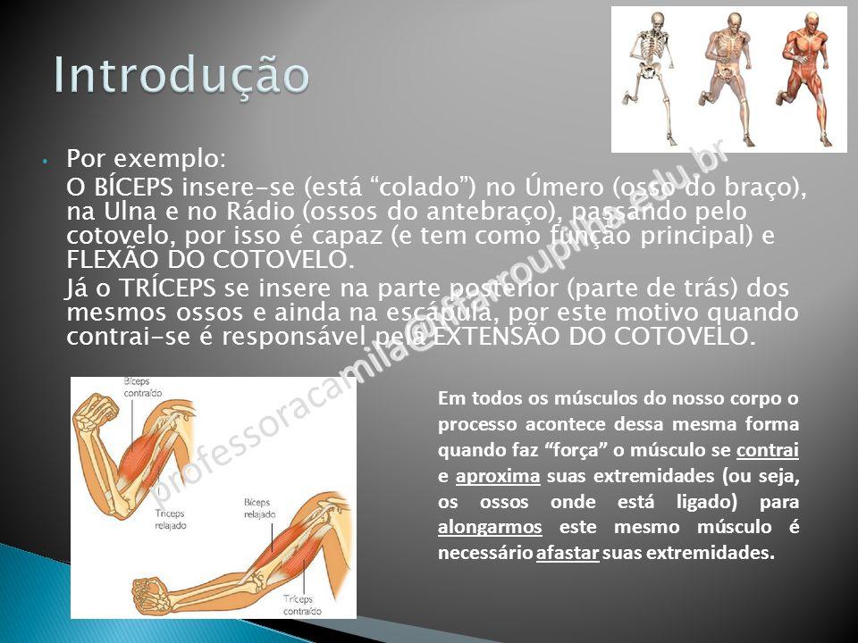 Membros superiores – Ombro – Cotovelo – Punho Membros inferiores – Coxo-femural – Joelho – Tornozelo Dorso (Tronco) – Coluna vertebral