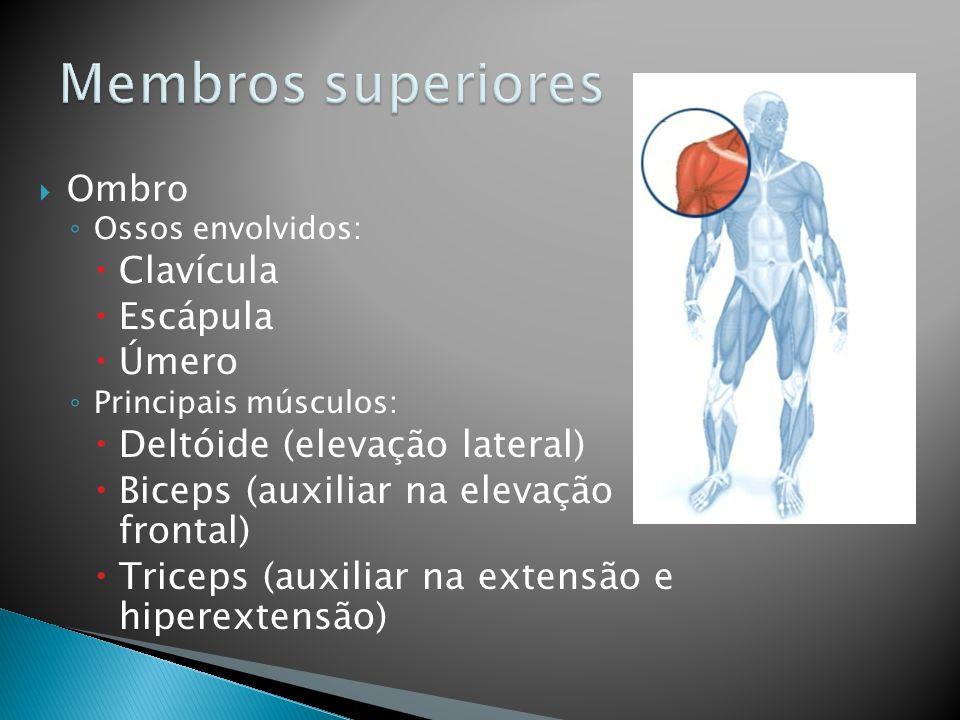 Joelho Ossos envolvidos: Femur Tíbia Fíbula Principais músculos: Quadríceps (extensão) Biceps femural, Grácil e Sartório (flexão)