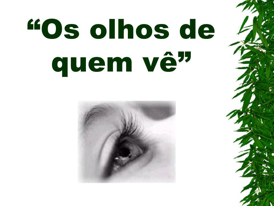 Os olhos de quem vê