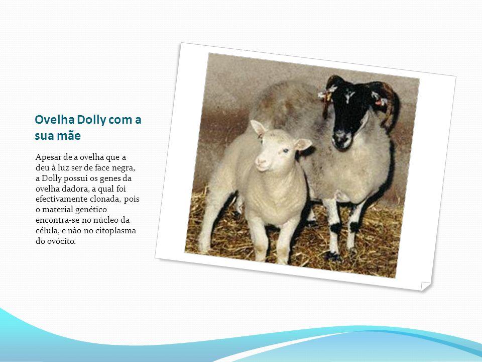Ovelha Dolly com a sua mãe Apesar de a ovelha que a deu à luz ser de face negra, a Dolly possui os genes da ovelha dadora, a qual foi efectivamente clonada, pois o material genético encontra-se no núcleo da célula, e não no citoplasma do ovócito.