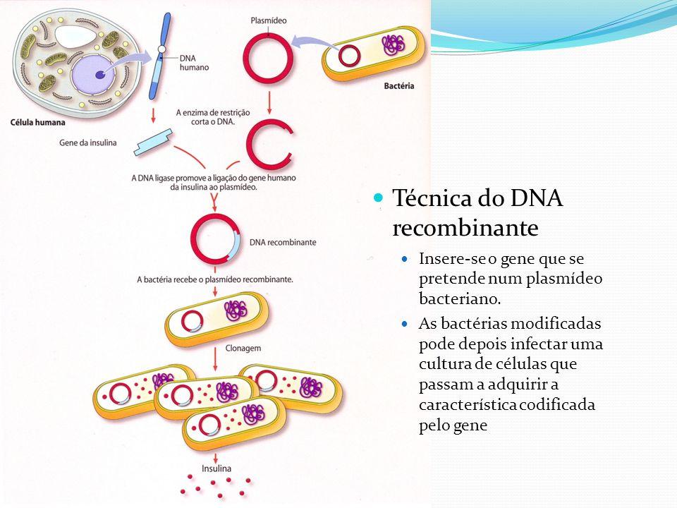 Técnica do DNA recombinante Insere-se o gene que se pretende num plasmídeo bacteriano.