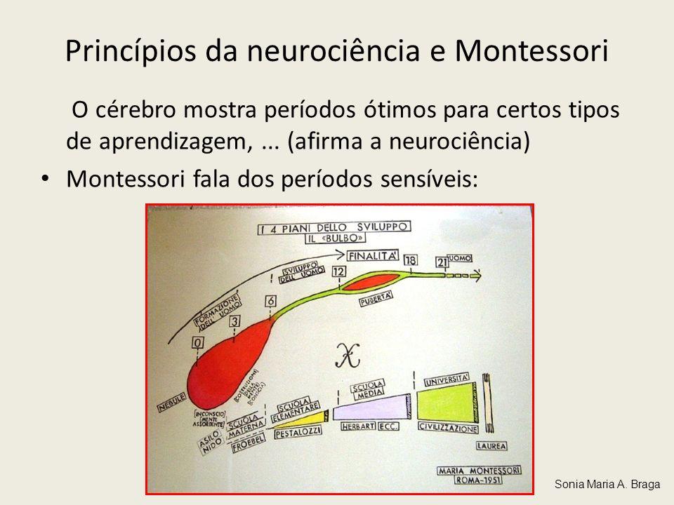 Princípios da neurociência e Montessori O cérebro mostra períodos ótimos para certos tipos de aprendizagem,... (afirma a neurociência) Montessori fala