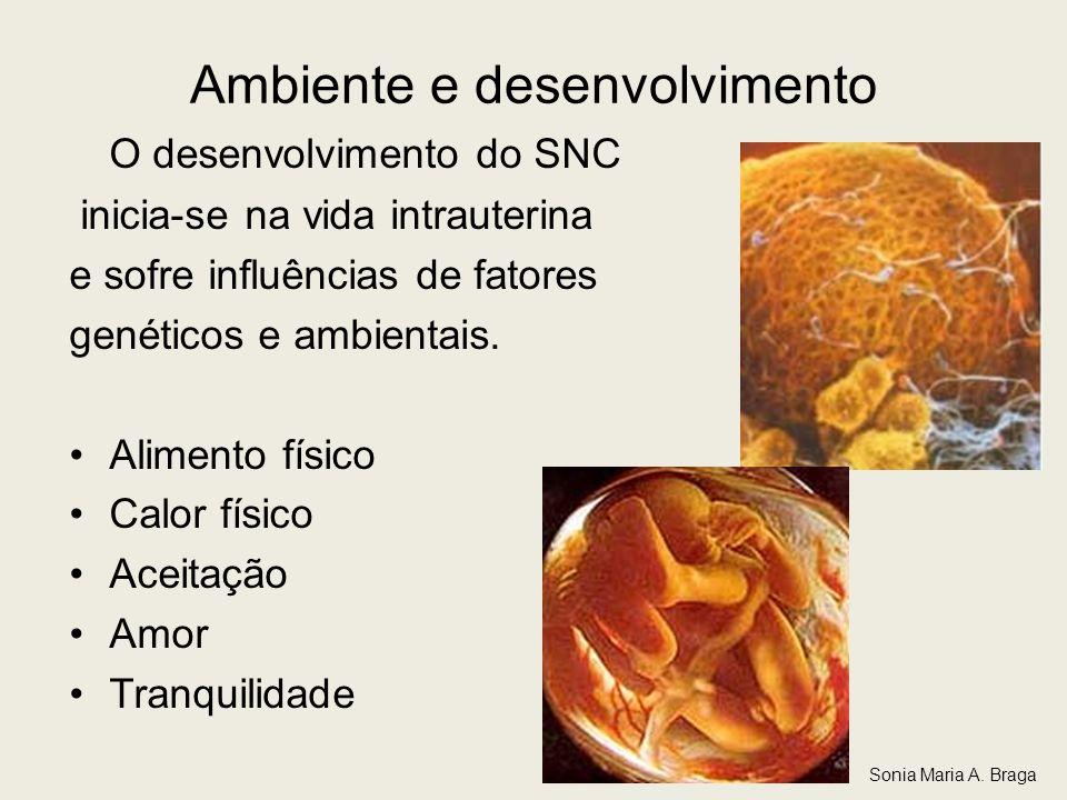 Ambiente e desenvolvimento O desenvolvimento do SNC inicia-se na vida intrauterina e sofre influências de fatores genéticos e ambientais. Alimento fís