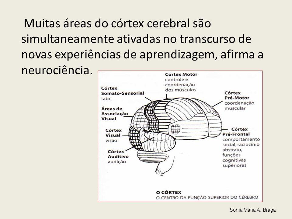 Muitas áreas do córtex cerebral são simultaneamente ativadas no transcurso de novas experiências de aprendizagem, afirma a neurociência. Sonia Maria A