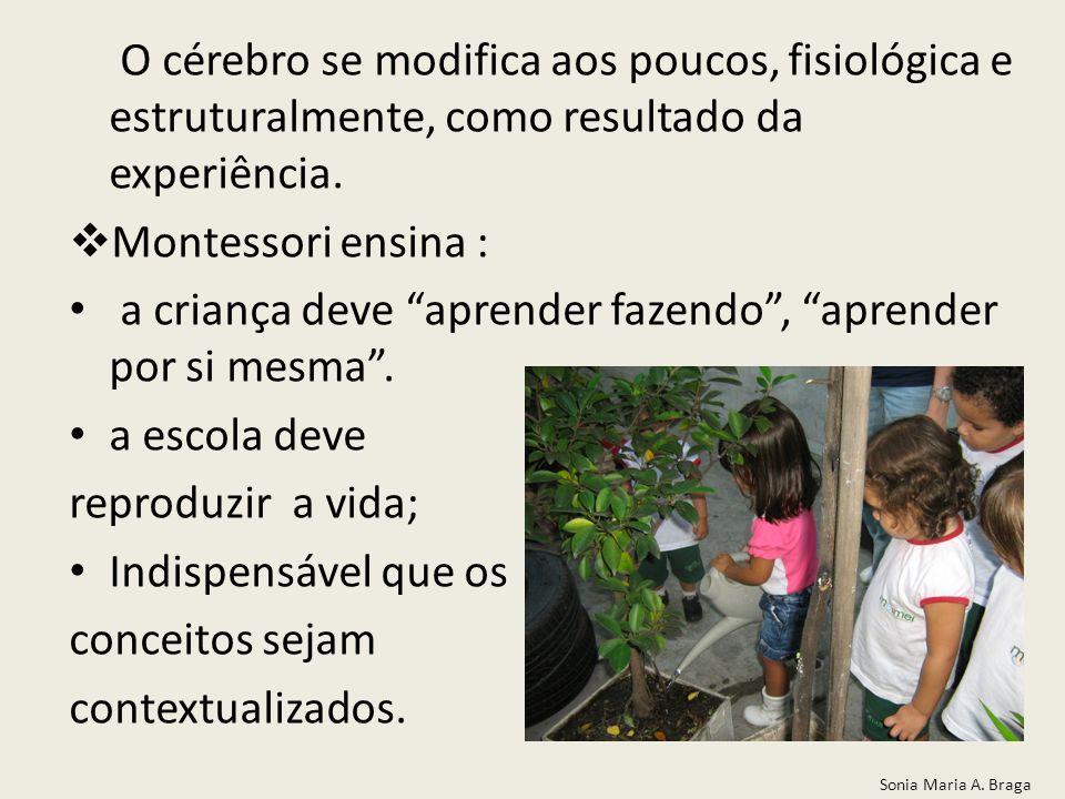 O cérebro se modifica aos poucos, fisiológica e estruturalmente, como resultado da experiência. Montessori ensina : a criança deve aprender fazendo, a