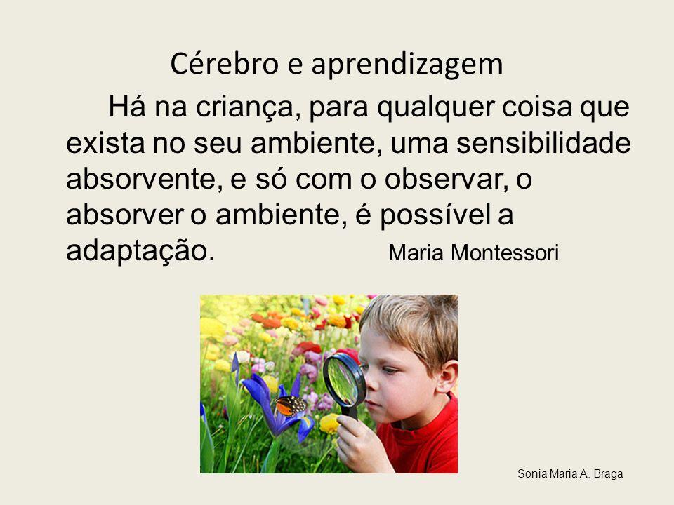 Cérebro e aprendizagem Há na criança, para qualquer coisa que exista no seu ambiente, uma sensibilidade absorvente, e só com o observar, o absorver o