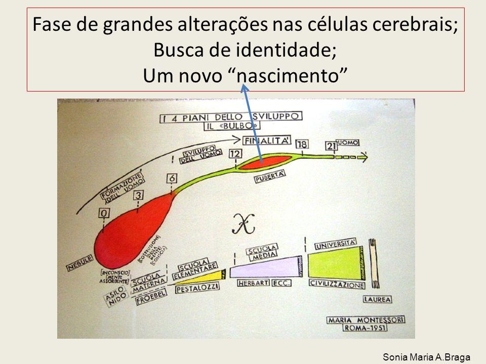 Fase de grandes alterações nas células cerebrais; Busca de identidade; Um novo nascimento Sonia Maria A.Braga