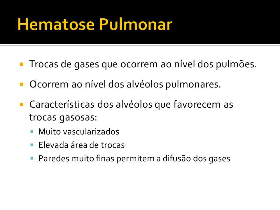 Trocas de gases que ocorrem ao nível dos pulmões. Ocorrem ao nível dos alvéolos pulmonares. Características dos alvéolos que favorecem as trocas gasos