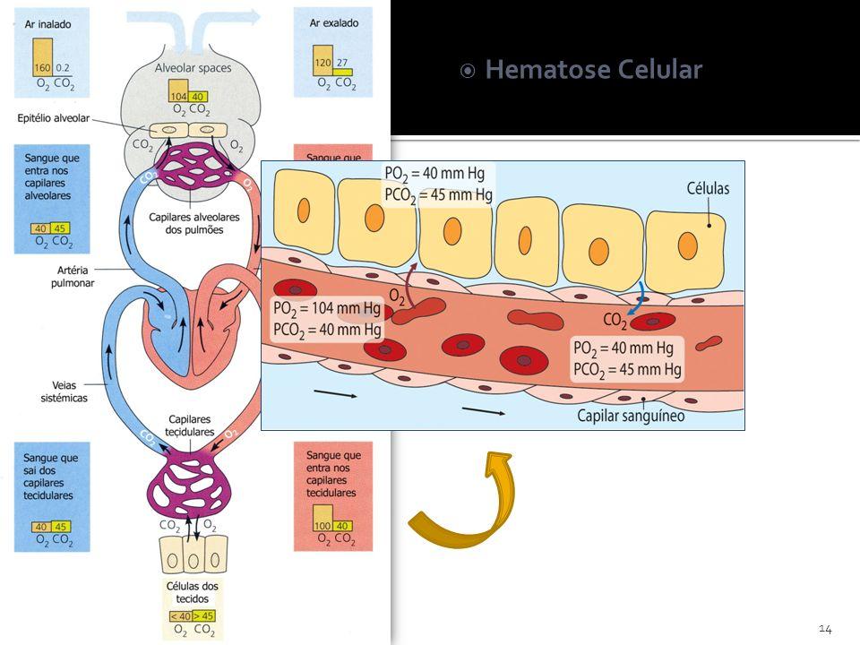 Hematose Celular 14