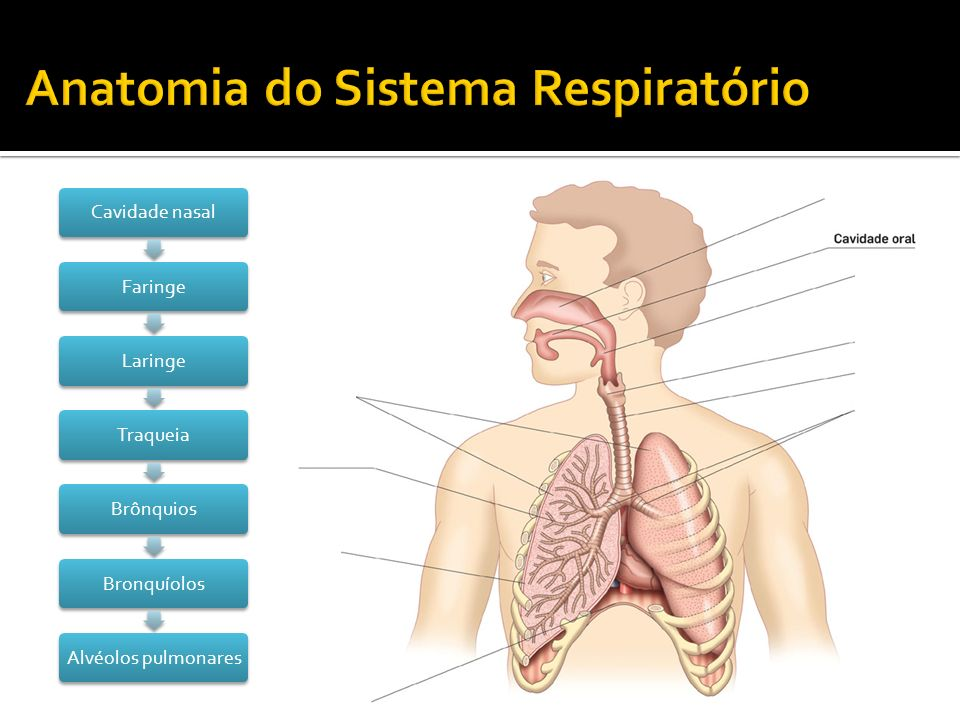 Cavidade nasalFaringeLaringeTraqueiaBrônquiosBronquíolosAlvéolos pulmonares
