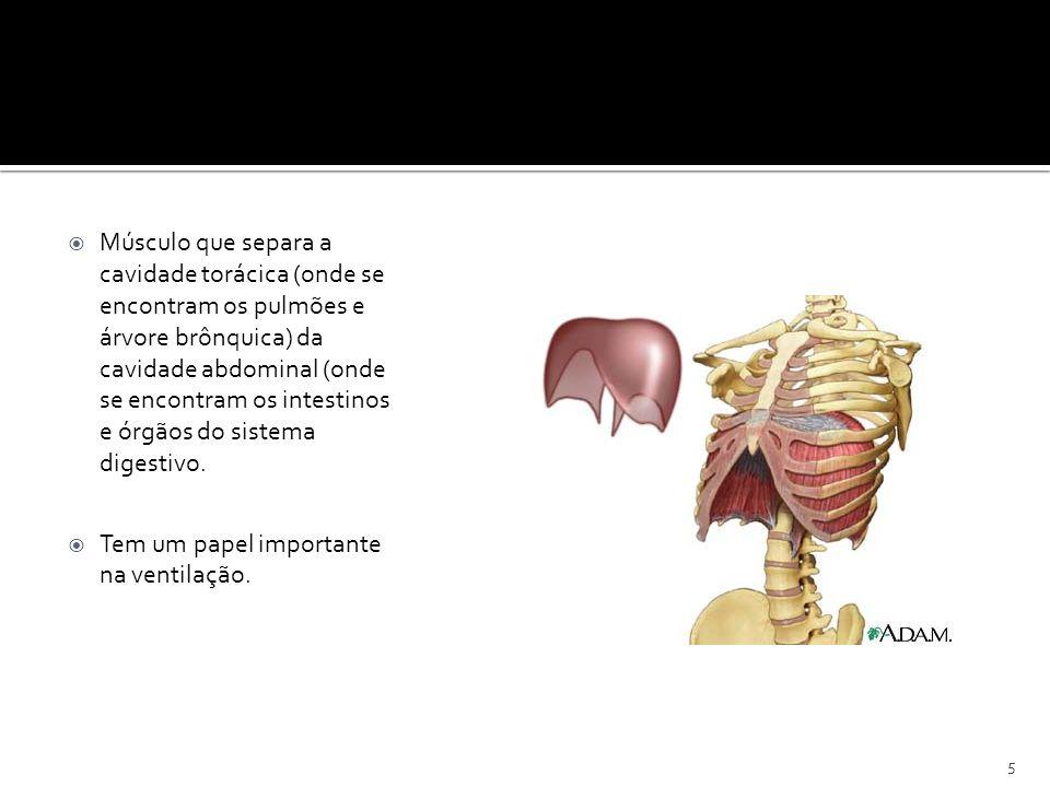 DIAFRAGMA 5 Músculo que separa a cavidade torácica (onde se encontram os pulmões e árvore brônquica) da cavidade abdominal (onde se encontram os intes