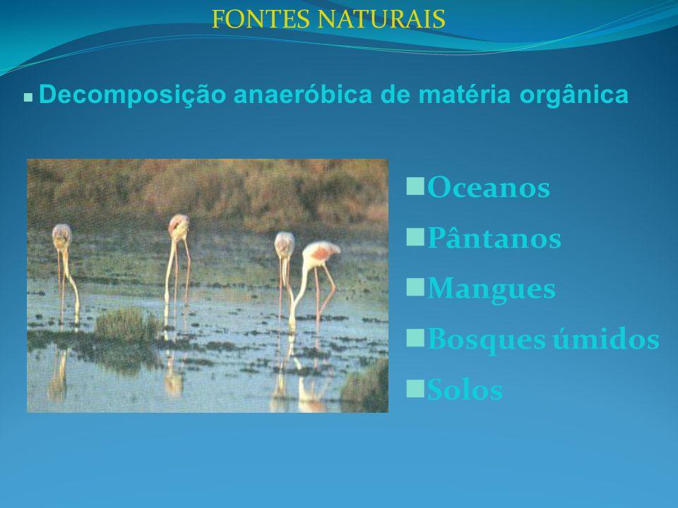 FONTES NATURAIS Decomposição anaeróbica de matéria orgânica Oceanos Pântanos Mangues Bosques úmidos Solos